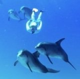 swim-with-dolphins-small1
